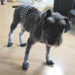 保護犬【倖大】庭付き希望