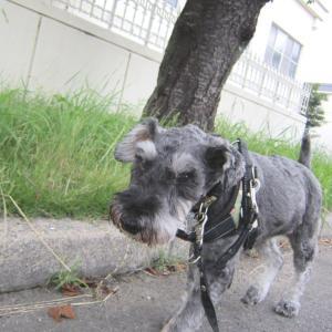 保護犬【倖大】鼻歌