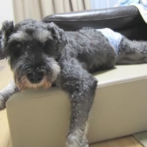保護犬【倖大】犬ラブ