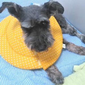 保護犬【ぜん】病院とご支援に感謝