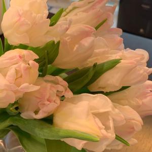 お花のある生活♪可愛いチューリップ♪