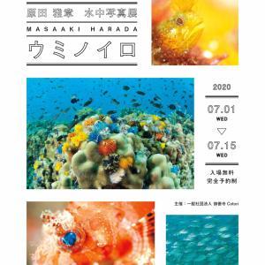 「水中写真展・ウミノイロ」海の日スタート!
