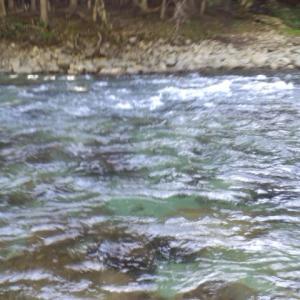 馬瀬川鮎釣り  過去ブログを見てみました1