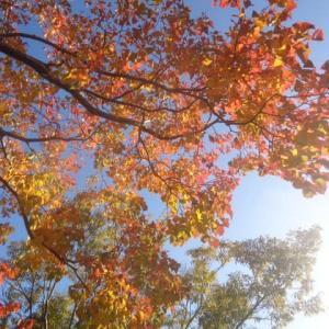 秋空の下のイチャイチャ散歩
