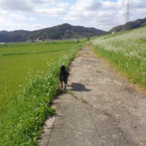 免疫力UPの春散歩