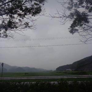 雨が降ってお日様が出て慌てる忙しない散歩
