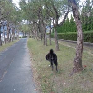 検証♪散歩中飼い主がうずくまったら心配する?