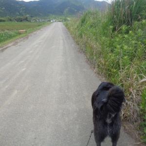 農道散歩の約束事