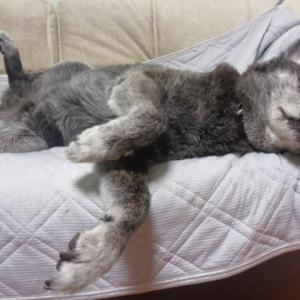 熱帯夜 添い寝を強要するもこもこ獣