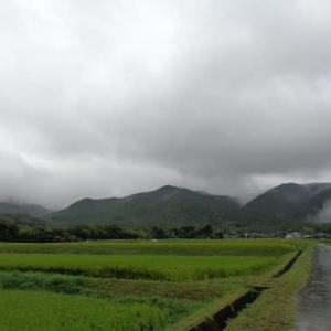 台風一過の朝散歩