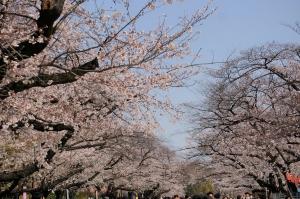 日本が一番美しい季節