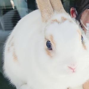 チャーミングセールでかわいいウサギのニモくんと♪