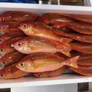 魚の種類ってめっちゃある