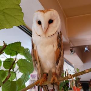 フクロウとおしゃべり?10月28日(月)ドッグカフェにてペットちゃんとお話します!神奈川・大和