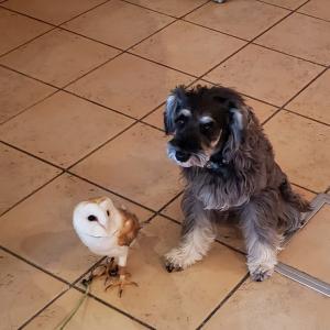 10月28日(月)フクロウもいるドッグカフェでペットちゃんとお話します♪神奈川・大和