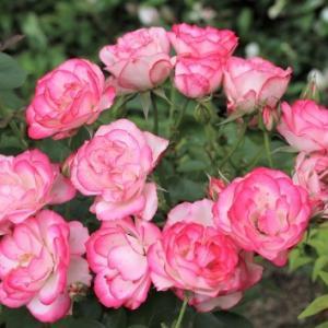 庭の植物とインテリア改善中