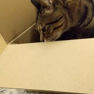 みんなの箱