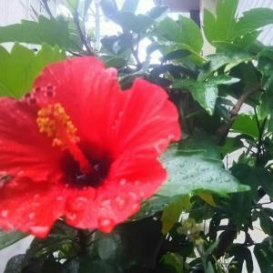 雨にも負けずに、花は咲くけど、太陽はそこにあるの…