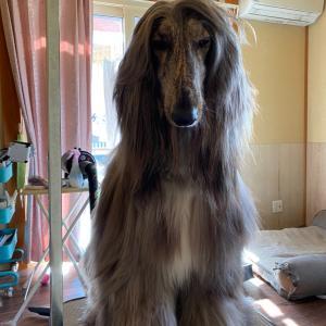 犬犬犬いぬ猫ねこ…人間