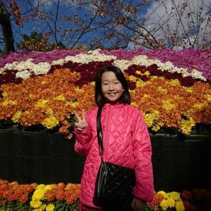 弘前城「菊と紅葉まつり」