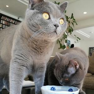 先代猫さんからお世話になっております◇寅三くん大二郎くん