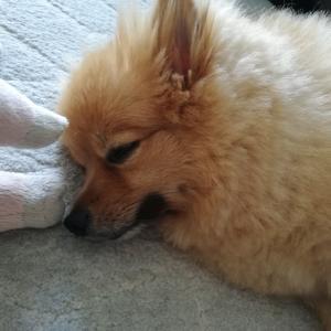♡♡まるちゃんの寝顔特集♡♡