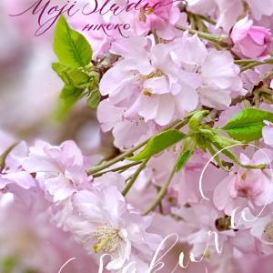 八重の枝垂れ桜