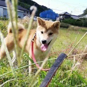 お散歩犬と日向ぼっこ猫。(7年160目)【2717日目】<112日目>