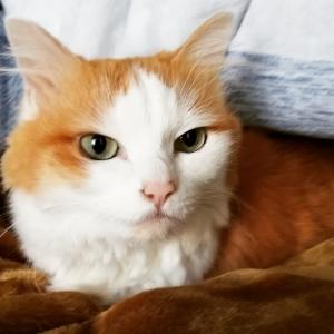 ギンちゃんの体重測定と犬猫お風呂に入ったよ!。(7年337目)【2894日目】<289日目>