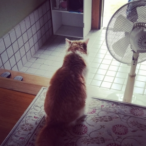連休最後の猫と犬の生活。(8年59日目)【2982日目】&(1年11日目)【377日目】