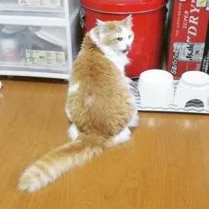 動く姿が珍しいお猫様と反対に動くの大好きなお犬様。(8年61日目)【2984日目】&(1年13日目)【379日目】