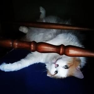 動いてる姿がなかなか見れないお猫様と元気なお犬様。(8年81日目)【3004日目】&(1年33日目)【399日目】