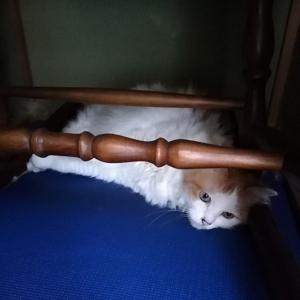 定位置変更のお猫様と暑くてもお外が好きなお犬様。(8年83日目)【3006日目】&(1年35日目)【401日目】
