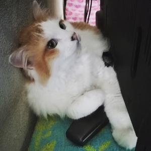 犬猫、元気!(8年86日目)【3009日目】&(1年38日目)【404日目】