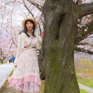 地元の桜並木・・・(ㆁᴗㆁ✿)