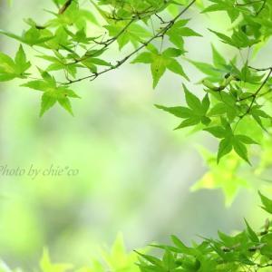 *秋の入り口の緑のなかで。。♪