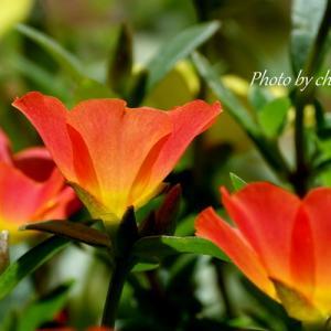 *カラフルに彩る花たち。。♪