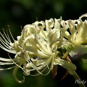 *長月の白い花たち。。~鎌倉 東慶寺~♪