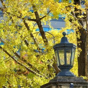 *warm yellow が彩る街。。Yokohama~2♪
