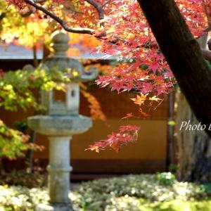 *風雅。。もみじの季。。~鎌倉 一条恵観山荘~1♪