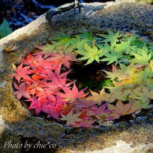 *癒しのひととき。。もみじの季。。~鎌倉 一条恵観山荘~2♪