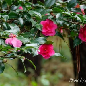 *名残りの花たちが彩る風景。。~横浜三渓園~♪