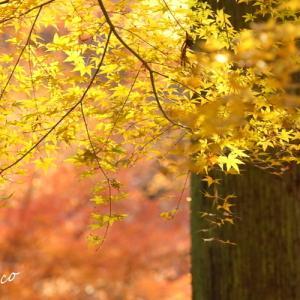 *優しい 冬もみじ。。.:**:.。..。.~鎌倉 東慶寺~♪