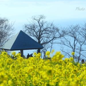 *海のみえる菜の花畑で。。~吾妻山公園~2♪