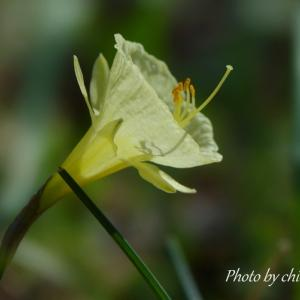 *early spring。。黄色の花たち。。♪