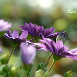 *癒しの紫。。