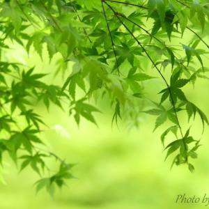 *癒しの fresh green。。♪