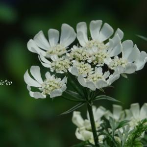 *優しい花彩。。♪