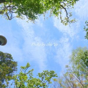 *みずみずしい緑と。。空。。♪