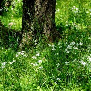 *白い花たちのワルツ。。♪